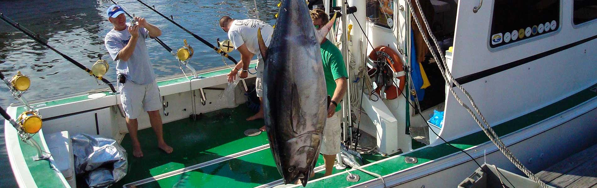 Offloading a big Bluefin tuna.